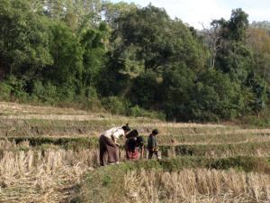 44ホイプロイ・棚田で野草を採る
