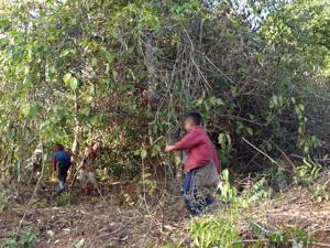 47ホイプロイ・薮の中を走り回る子供たち