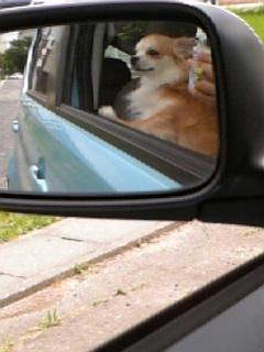 コタ君ドライブ