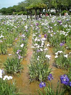 潮来水郷公園2