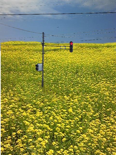 画像 野花信号
