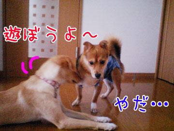 20080916-01.jpg