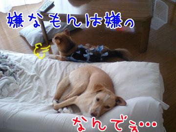 20080916-03.jpg