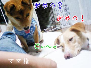 20080918-03.jpg