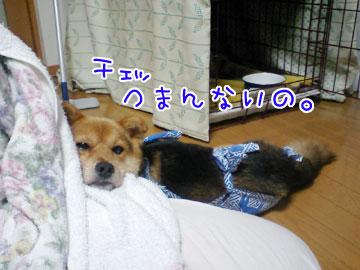 20080918-05.jpg