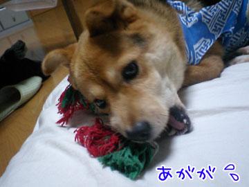 20080918-07.jpg