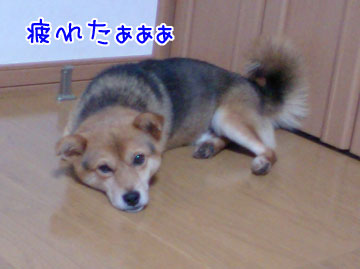 20080922-04.jpg