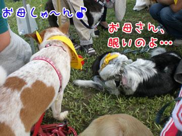 20081006-03.jpg