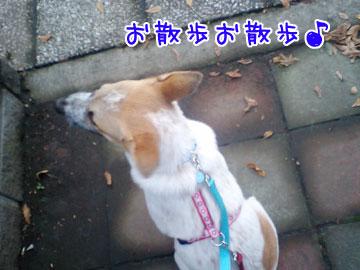 20081007-05.jpg