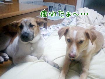 20081017-04.jpg