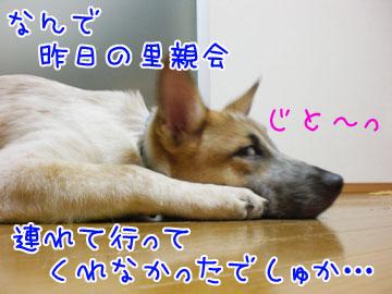 20081020-03.jpg