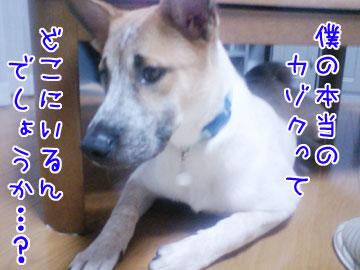 20081020-04.jpg