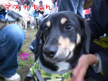 20081116-02.jpg