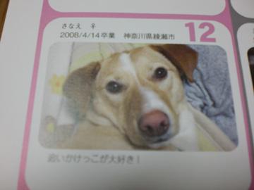 20081116-11.jpg