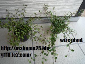 P1000979_convert_20090427134222.jpg