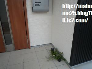 P1000982_convert_20090427134423.jpg