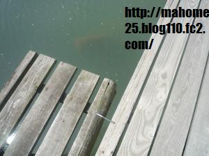 P1010036_convert_20090507132443.jpg