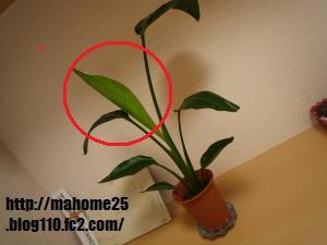 P1020023_convert_20090629114126_20090629115915.jpg