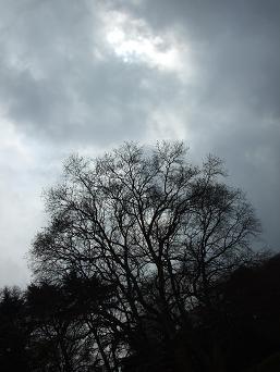 20090404b.jpg