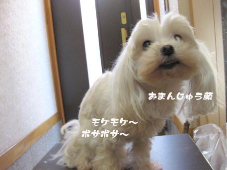 20090312-006.jpg
