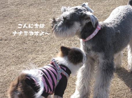 20090317-003.jpg