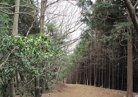 高尾山、稲荷山コース09.3.2-2