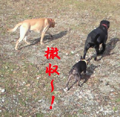 china14.jpeg