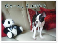 panda4.jpeg
