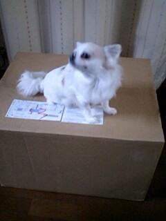 グッスミンの箱とマーブル