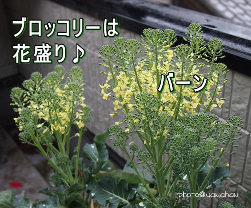 P3090298.jpg