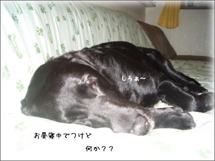 CIMG1704_1.jpg
