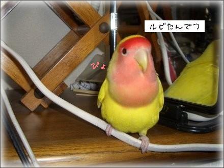 CIMG6976_1.jpg