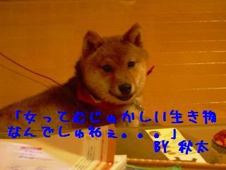 img20060423_4.jpg