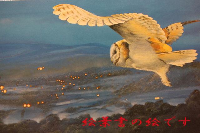 メンフクロウの絵葉書2