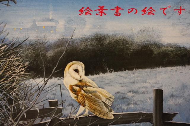 メンフクロウの絵葉書3