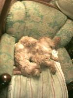 グラントは熟睡中