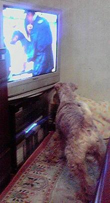 テレビvsグラント