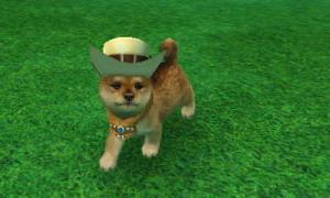 dogs0736.jpg