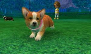 dogs0741.jpg