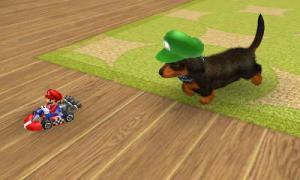 dogs0747.jpg