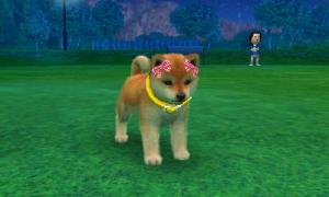 dogs0748.jpg