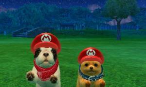 dogs0766.jpg