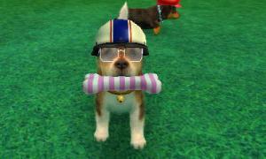 dogs0790.jpg