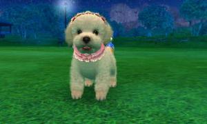 dogs0797.jpg