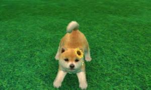 dogs0803.jpg