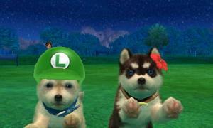 dogs0815.jpg