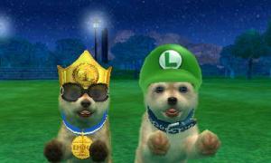 dogs0817.jpg