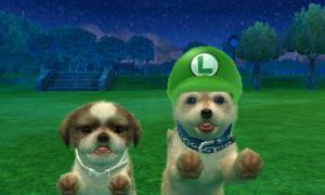 dogs0819.jpg