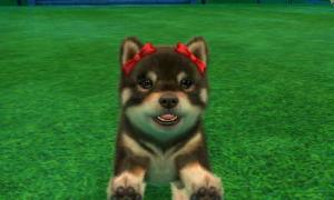 dogs0824.jpg