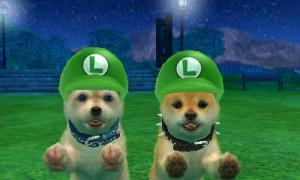 dogs0831.jpg